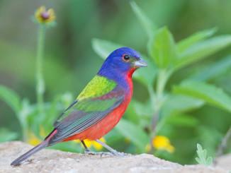 У чому проблема скорочення кількості птахів в Північній Америці?