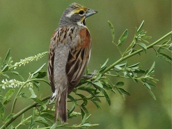 Основні заходи щодо захисту диких птахів, пропоновані в США