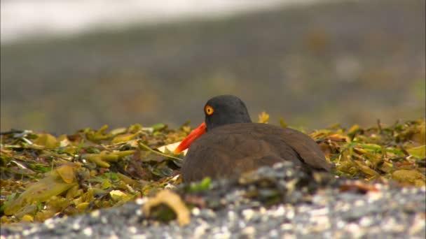 Втрата середовища - основний фактор зниження кількості диких птахів