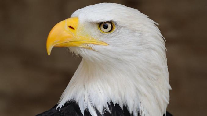 Північна Америка втратила майже 3 мільярди птахів з 1970 року
