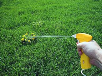 Обробка газону гербіцидами