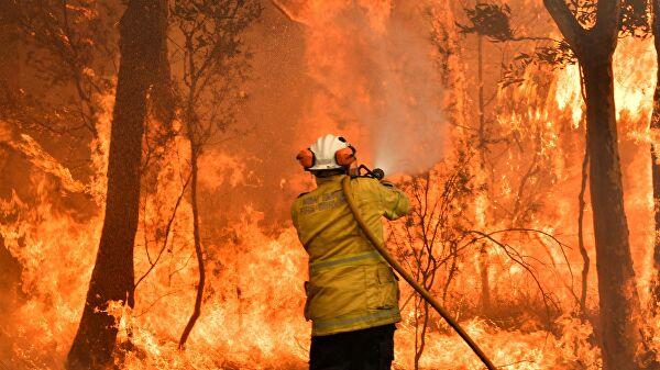 Сезон лісових пожеж в Австралії