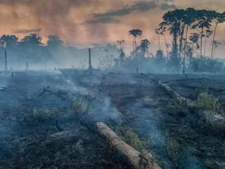 Лісові пожежі в Амазонії